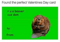 Found the perfect Valentines Day card  r u a beaver  cuz damn  to:  from: You know who you are😍👌👅❤ and omfg, dead😂😂