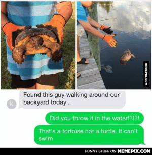 Don't worry, they saved the little dude.omg-humor.tumblr.com: Found this guy walking around our  backyard today .  Did you throw it in the water!?!?!  That's a tortoise not a turtle. It can't  swim  FUNNY STUFF ON MEMEPIX.COM  МЕМЕРIХ.Сом Don't worry, they saved the little dude.omg-humor.tumblr.com