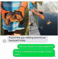 Good, Today, and Turtle: Found this guy walking around our  backyard today  Did you throw it in the waterl?!?!  That's a tortoise not a turtle. It can't  swim me when i try to do something good https://t.co/TBJskfs3r2