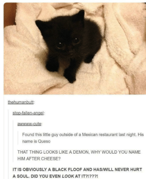 Quesito: Found this little guy outside of a Mexican restaurant last night. His  name is Queso  THAT THING LOOKS LIKE A DEMON, WHY WOULD YOU NAME  HIM AFTER CHEESE?  IT IS OBVIOUSLY A BLACK FLOOF AND HAS/WILL NEVER HURT  A SOUL. DID YOU EVEN LOOK AT IT?!???! Quesito