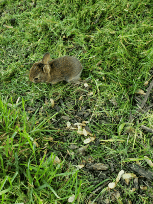 One, This, and Little: Found this little one while mowing the lawn
