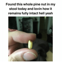 Memes, Yeah, and Today: Found this whole pine nut in my  stool today and lovin how it  remains fully intact hell yeah Give it up for stoolnuts 🙌🏼