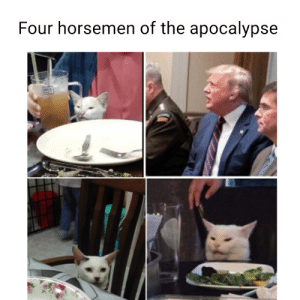 Woman yells at cat meme ft. my cat on the bottom left.: Four horsemen of the apocalypse Woman yells at cat meme ft. my cat on the bottom left.