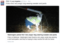 """bellevue: FOX 11 Los Angeles  @FOXLA 50m  FOX  Police find """"very angry"""" dog wearing sweater and pants  Washington police find """"very angry"""" dog wearing sweater and pants  Police in Bellevue, Washington have found a very  angry small dog wearing  a shirt and pants, and they're hoping to help reunite him with his owner  foxla.com"""