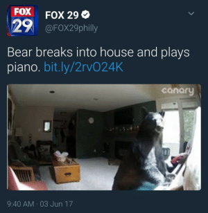 tuckofthetown:Let him practice. His recital is soon: FOX  29  FOX 29 Ф  @FOX29philly  Bear breaks into house and plays  piano. bit.ly/2rvO24K  canary  9:40 AM 03 Jun 17 tuckofthetown:Let him practice. His recital is soon