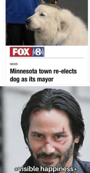 Very wholesome by n1GG99 MORE MEMES: FOX/8  NEWS  Minnesota town re-elects  dog as its mayor  visible happiness Very wholesome by n1GG99 MORE MEMES