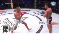Boxing, Memes, and Ufc:  #FOX FIGHT  vivo  BELLATOR  PICO  HIGO  ROUND 1 3  2:29 @aaronpicousa continues his rise as he makes quick work of his opponent in one round ufc mma bellator wsof fight jj jiujitsu muaythai wrestling boxing kickboxing grappling funnymma ufcmeme mmamemes onefc warrior PrideFC prideneverdies