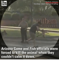 Memes, News, and Animal: FOX  NEWS  Anthem, Arizona  Courtesy: Jason Garrido/ViralHog  then  Arizona Game and Fish officials were  forced to kill the animal when they  couldn't calm it down TERRIFYING MOMENTS: Video shows a bobcat attacking a man and his dog in Arizona.