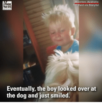 Dad, Memes, and News: FOX  NEWS  iverton, Australia  Tali Yard via Storyful  Eventually, the boy looked over at  the dog and just smiled. When a young boy was upset because his dad left for work without him, the family's empathetic dog, Roxy, cried alongside him until he smiled.
