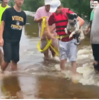 Memes, News, and Fox News: FOX  NEWS  Kavan Wise via Storyful An incredible video captured the moment a group of Harvey victims in Lumberton, Texas braved raging floodwaters to rescue a dog that had been swept away in a current.
