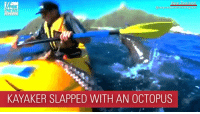 Memes, News, and Fox News: FOX  NEWS  KAYAKER SLAPPED WITH AN OCTOPUS SEAL SLAP: A kayaker in New Zealand had a surprise visitor — who smacked him with an octopus.