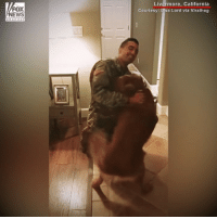 Memes, News, and California: FOX  NEWS  Livermore, California  Courtesy: Uisa Lord via Viralhog HEARTWARMING: This golden retriever got the surprise of a lifetime when a special soldier returned home from training.