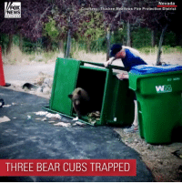Firefighters in Nevada rescued three little bears after they got stuck in a dumpster looking for a midnight snack.: FOX  NEWS  Nevada  Courtesy: Truckee Meadows Fire Protection District  THREE BEAR CUBS TRAPPED Firefighters in Nevada rescued three little bears after they got stuck in a dumpster looking for a midnight snack.
