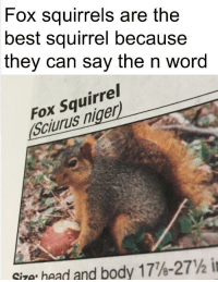 Squirrel: Fox squirrels are the  best squirrel because  they can say the n word  Fox Squirrel  Sciurus niger  Size head and body 1778-  27yS i