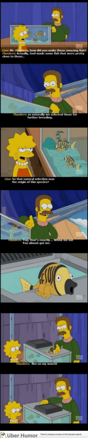omg-pictures:  You almost got mehttp://omg-pictures.tumblr.com: FOX4]  Lisa: Mr. Flanders, how did you make these amazing fish?  Flanders: Actually, God made some fish that were pretty  dose to these..  Flanders: so naturally we selected those for  further breeding.  JES  Lisa: So that natural selection was  the origin of this species?  Tlanders: Yup, that's exactly... whoa-oa-oa!  You almost got me.  FOX41  WORK  FOX41  WOR  Flanders: Not on my watch!  There's always money in the banana stand  Uber Humor omg-pictures:  You almost got mehttp://omg-pictures.tumblr.com