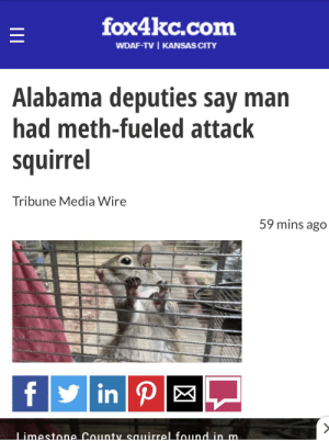 Alabama, Squirrel, and Never: fox4kc.com  WDAF-TV KANSAS CITY  Alabama deputies say man  had meth-fueled attack  squirrel  Tribune Media Wire  59 mins ago  f in P |  Limestone County sauirrel found in m.  II Alabama never fails to disappoint