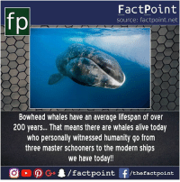 Witness of technical evolution 🐋: fp  FactPoint  source: factpoint.net  Bowhead whales have an average lifespan of over  200 years... That means there are whales alive today  who personally witnessed humanity go from  three master schooners to the modern ships  we have today!! Witness of technical evolution 🐋