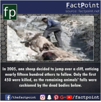 enticing: fp  FactPoint  source: factpoint.net  In 2005, one sheep decided to jump over a cliff, enticing  nearly fifteen hundred others to follow. Only the first  450 were killed, as the remaining animals' falls were  cushioned by the dead bodies below.