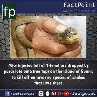 Tylenol: fp  FactPoint  source: factpoint.net  Mice injected ul of Tylenol are dropped by  parachute onto tree tops on the island of Guam  to kill off an invasive species of snakes  that lives there.