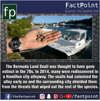 Facts, Friends, and Memes: fp  FactPoint  source: factpoint.net  The Bermuda Land Snail was thought to have gone  extinct in the 70s. In 2014, many were rediscovered in  a Hamilton city alleyway. The snails had colonized the  alley early on and the surrounding city shielded them  from the threats that wiped out the rest of the species. Fact sources mentioned at www.FactPoint.net- did you know fact point , education amazing dyk unknown facts daily facts💯 didyouknow follow follow4follow earth science commonsense f4f factpoint instafact awesome world worldfacts like like4ike tag friends Don't forget to tag your friends 👍
