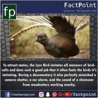 Imitating: fp  FactPoint  source: factpoint.net  To attract mates, the Lyre Bird imitates all manners of bird-  calls and does such a good job that it often fools the birds it's  imitating. During a documentary it also perfectly mimicked a  camera shutter, a car alarm, and the sound of a chainsaw  from woodcutters working nearby.