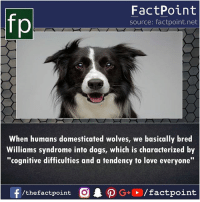 "cognitive: fp  FactPoint  source: factpoint.net  When humans domesticated wolves, we basically bred  Williams syndrome into dogs, which is characterized by  ""cognitive difficulties and a tendency to love everyone"""