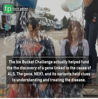 The Discovery: fp  O fact point  The Ice Bucket Challenge actually helped fund  the the discovery of a gene linked to the cause of  ALS. The gene, NEK1, and its variants held clues  to understanding and treating the disease.  for sources -faclpoint.net