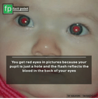 Memes, Pictures, and The Flash: fp  Pfact point  You get red eyes in pictures because your  pupil is just a hole and the flash reflects the  blood in the back of your eyes  for sources factpoint.nel 📸