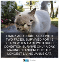 Cats, Memes, and Living: FRANK AND LOUIE, A CAT WITH  TWO FACES, SURVIVED FOR 15  YEARS WHEN CATS WITH SUCH  CONDITION SURVIVE ONLY A DAY,  MAKING FRANKENLOUIE THE  LONGEST LIVING JANUS CAT.  Ef Postize