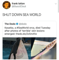 Memes, SeaWorld, and Sea World: frank lotion  @GucciClout  SHUT DOWN SEA WORLD  The Dodo @dodo  Kasatka, a #SeaWorld orca, died Tuesday  after photos of 'terrible' skin lesions  emerged: thedo.do/2x5mAfw @seaworldorldando @seaworldsandiego