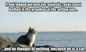 Animals, Cats, and Funny: Franklooked outoverthe majesticrockycoast  bathed inthegrandeurofthesetting sun.  and he thoughtof nothing, becauseheisacat. These are probably the deep philosophical thoughts crossing Their mind right now. #cats # animals # funny memes # animal memes # cat memes # philosophical mood # inspiration
