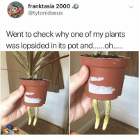 Creepy, Cute, and Memes: franktasia 2000  @tytonidaeus  Went to check why one of my plants  was lopsided in its pot and.....oh... this is cute and creepy