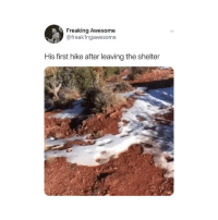 Memes, Omg, and Twitter: Freaking Awesome  @freakIngawesome  His first hike after leaving the shelter omg wait for it 😭 (@freak1ngawesome on Twitter)