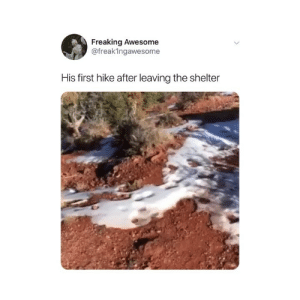 Memes, Twitter, and Awesome: Freaking Awesome  @freakIngawesome  His first hike after leaving the shelter wait for it 😭😭😭 (@freak1ngawesome on Twitter)