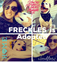 Comfortable, Memes, and Scare: FRECKLES Sweet FRECKLES is Adopted.  http://www.noahs-arks.net/animal/view/freckles/816#.WDn55neZOu4  It's Official.  Freckles is ADOPTED.   I waited over a month before posting this wonderful news to make sure the Adoption was going to work out for Freckles and his new Family.  We were very hopeful, but I still wanted to give everyone time to get into a good routine.    Freckles and his new Family bonded immediately.   It was Love at first sight and has remained so.   Our dear boy went through a year of pure Hell recovering from all of the Abuse he endured at the hands of a very deranged person.  He was scared and fearful all the time.    It has only been over the last year that he has been comfortable with certain individuals and even then he was highly unpredictable.    The last six months we felt strongly that the worst was over for this amazing dog.   He was sent to our wonderful Trainer in  North Carolina to complete his final Training before he was placed in a home.  It was during this time that we received an application that we thought would be perfect for this sweet boy.   Lots of one on one time happened with the new Family, the Trainer, and Freckles.     Freckles finally has a Home he can call his own.   We could not ask for more for this amazing dog.  Unconditional love and support to get him through his rough times which seem to be far behind him.   We will always be there for this wonderful dog if something should happen but I believe he is officially HOME.   Thanks for caring and playing a big part in Healing Freckles from all the abuse he endured and helping him find Love and Heal.