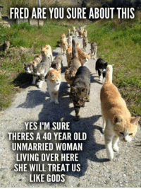Cute, Memes, and Old: FRED ARE YOU SURE ABOUT THIS  YES I'M SURE  THERES A 40 YEAR OLD  UNMARRIED WOMAN  LIVING OVER HERE  SHE WILL TREAT US  LIKE GODS For more cute pics LIKE us at The Purrfect Feline Page
