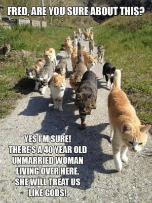 Old, Living, and Fred: FRED,ARE YOU SURE ABOUT THIS?  YESIMSURE!  THERESA 40 YEAR OLD  UNMARRIED WOMAN  LIVING OVER HERE  SHE WILLTREAT US  LIKE GODS! Just trust me