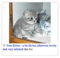 i was looking for free furniture but maybe thats not what i was meant to find: Free Kitten - a bit fat but otherwise lovely  and very talented (Bel Air) i was looking for free furniture but maybe thats not what i was meant to find