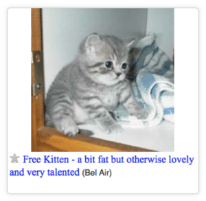 thegoodvybe:i was looking for free furniture but maybe thats not what i was meant to find: Free Kitten - a bit fat but otherwise lovely  and very talented (Bel Air) thegoodvybe:i was looking for free furniture but maybe thats not what i was meant to find