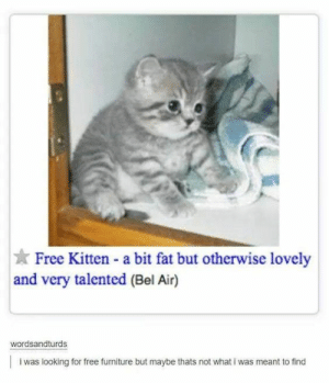 Tumblr, Free, and Furniture: Free Kitten - a bit fat but otherwise lovely  and very talented (Bel Air)  wordsandturds  i was looking for free furniture but maybe thats not what i was meant to find I would die for this kitten