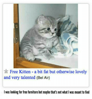 Reddit, Free, and Furniture: Free Kitten - a bit fat but otherwise lovely  and very talented (Bel Air)  I was looking for free furniture but maybe that's not what I was meant to find Right up my alley. Seek and ye shall find