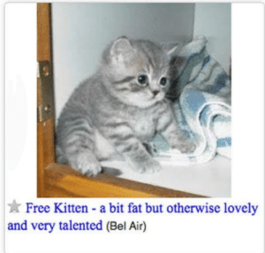 I'll take him.: Free Kitten a bit fat but otherwise lovely  and very talented (Bel Air) I'll take him.
