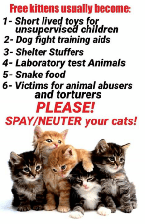 Animals, Cats, and Children: Free kittens usually become:  Short lived toys for  unsupervised children  2- Dog fight training aids  3- Shelter Stuffers  4- Laboratory test Animals  5- Snake food  6- Victims for animal abusers  and torturers  PLEASE!  SPAY/NEUTER your cats! Reminder :(