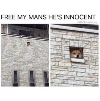 Memes, 🤖, and Dis: FREE MY MANS HE'S INNOCENT  (a rsmashlove Whomste's pups is dis? 🤔😂😂😂