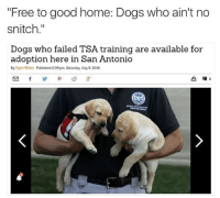 """these good boys don't get stitches: """"Free to good home: Dogs who ain't no  snitch.""""  Dogs who failed TSA training are available for  adoption here in San Antonio  By Tyler White  Published 209 pm Saturday. July 9.2016 these good boys don't get stitches"""