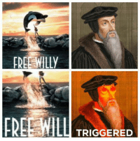 Free Willy: FREE WILLY  FREE WIL  TRIGGERED