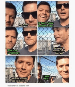 The supernatural fandom is easy pickings: freeklesandfeaUse  HISam! Future  Brother in law!  Hey Sam!  Because  haven't told  him yet  Why is he  Screaming?  I said  YES!  Sammy, lasked  Cas to marry me  Dean and Cas facetime Sam The supernatural fandom is easy pickings