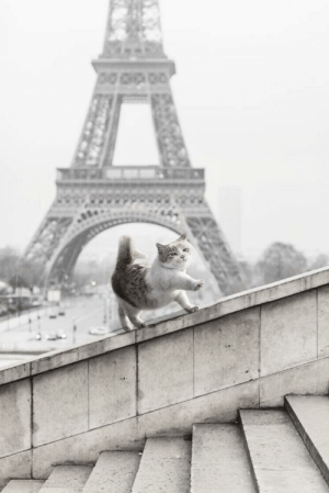 Paris, French, and Nazis: French aristocat showing its support for the Nazis (Paris, 1940)