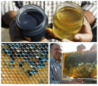 French beekeepers were shocked to find their bees had produced a supply of thick, blue honey. Turns out the bees had been feeding on the colourful shells of MMs at a Mars processing plant sat just 4 km away.: French beekeepers were shocked to find their bees had produced a supply of thick, blue honey. Turns out the bees had been feeding on the colourful shells of MMs at a Mars processing plant sat just 4 km away.