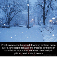 ambient: Fresh snow absorbs sound, lowering ambient noise  over a landscape because the trapped air between  snowflakes attenuates vibration. That's why it  gets so quiet when it snows.  fb.com/facts weird